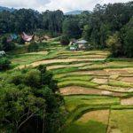 image grains de riz rizières